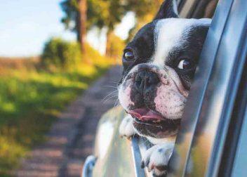 Hond in een auto opweg naar een lastminute vakantiehuis in Nederland